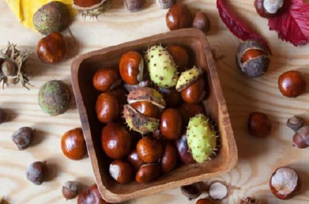 Gaštany ako jesenné plody