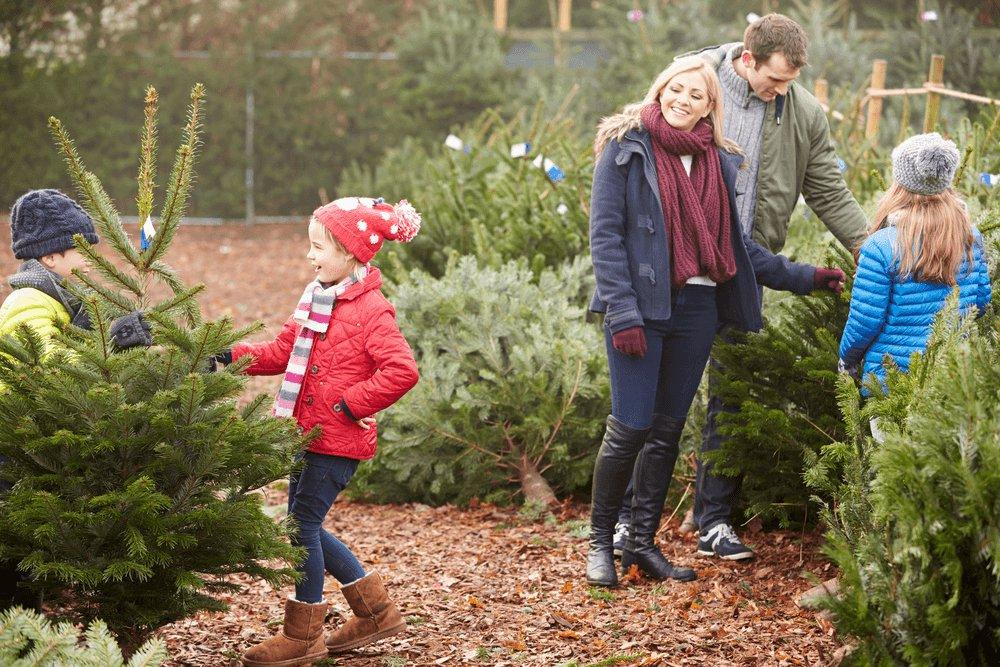 Rodinka vyberá živý vianočný stromček