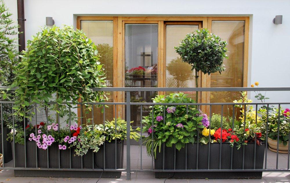 Rastliny na balkóne