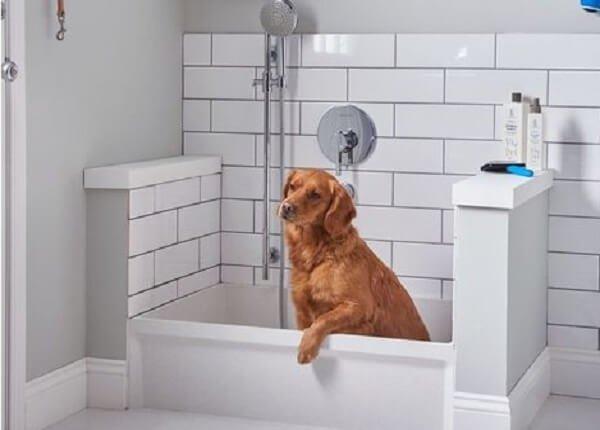 Hnedý pes v bielej vani