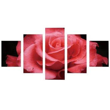 Obraz tlačený na plátno, viacfarebný, DX TYP 7 RUŽA