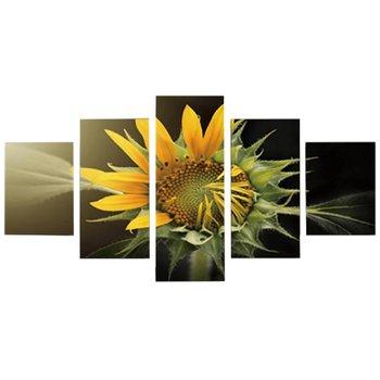 Obraz tlačený na plátno, viacfarebný, DX TYP 9 SLNEČNICA