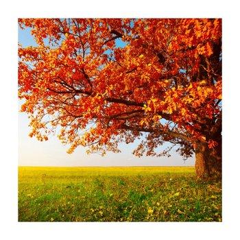 Obraz tlačený na plátno, viacfarebný, 30x30, PK 1000